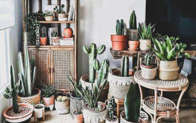 Descubriendo el estilo vintage de La Casita Cactus